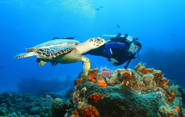 Dive pristine reefs at Isla Cozumel