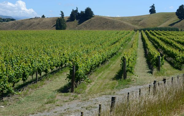 Sample Nelson's vineyards on a bike tour