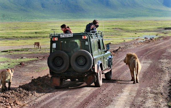 Spend a day in Ngorongoro's volcanic crater looking for wildlife