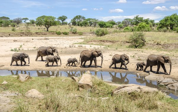 Search for elephants in Tarangire National Park
