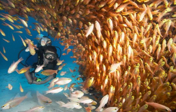 Dive or snorkel off the Kigomasha Peninsula on Pemba