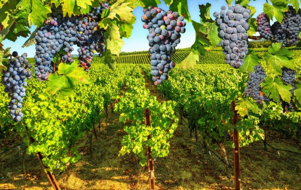Explore Napa wine country