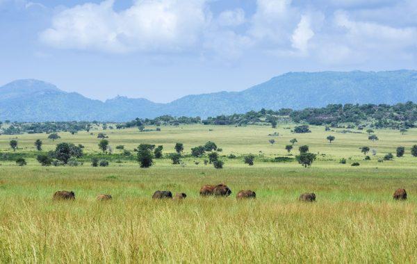 Visit the Ik people in Kidepo
