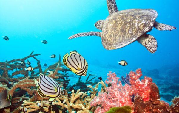 Snorkel or dive Con Dao Islands