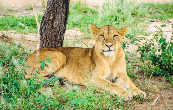 On safari in Tarangire National Park