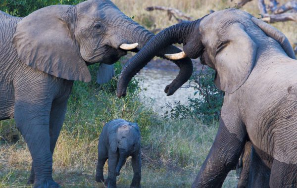 Safari in Ruaha National Park