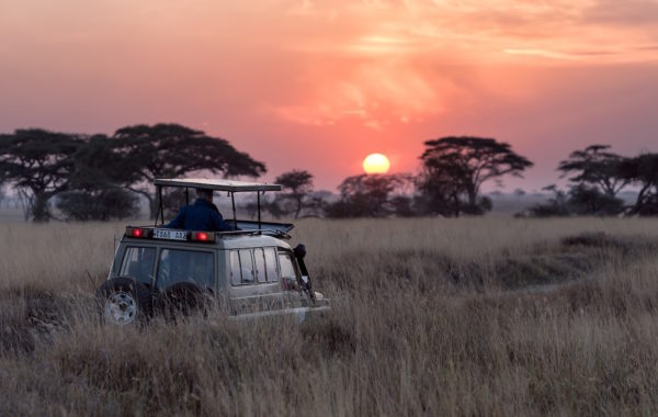 Fly to your second Serengeti camp