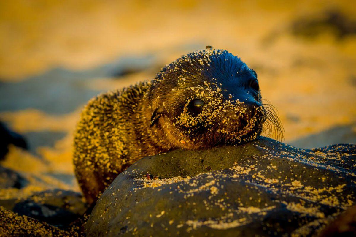 010-Galapagos