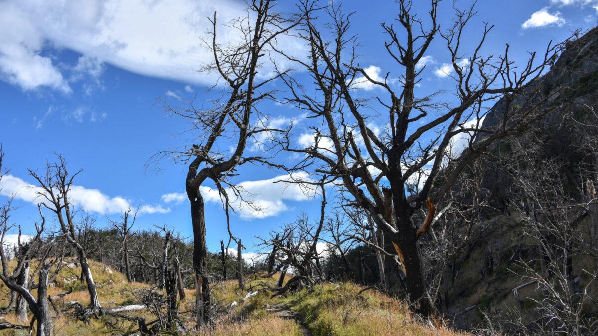 020 Torres Del Paine Fire
