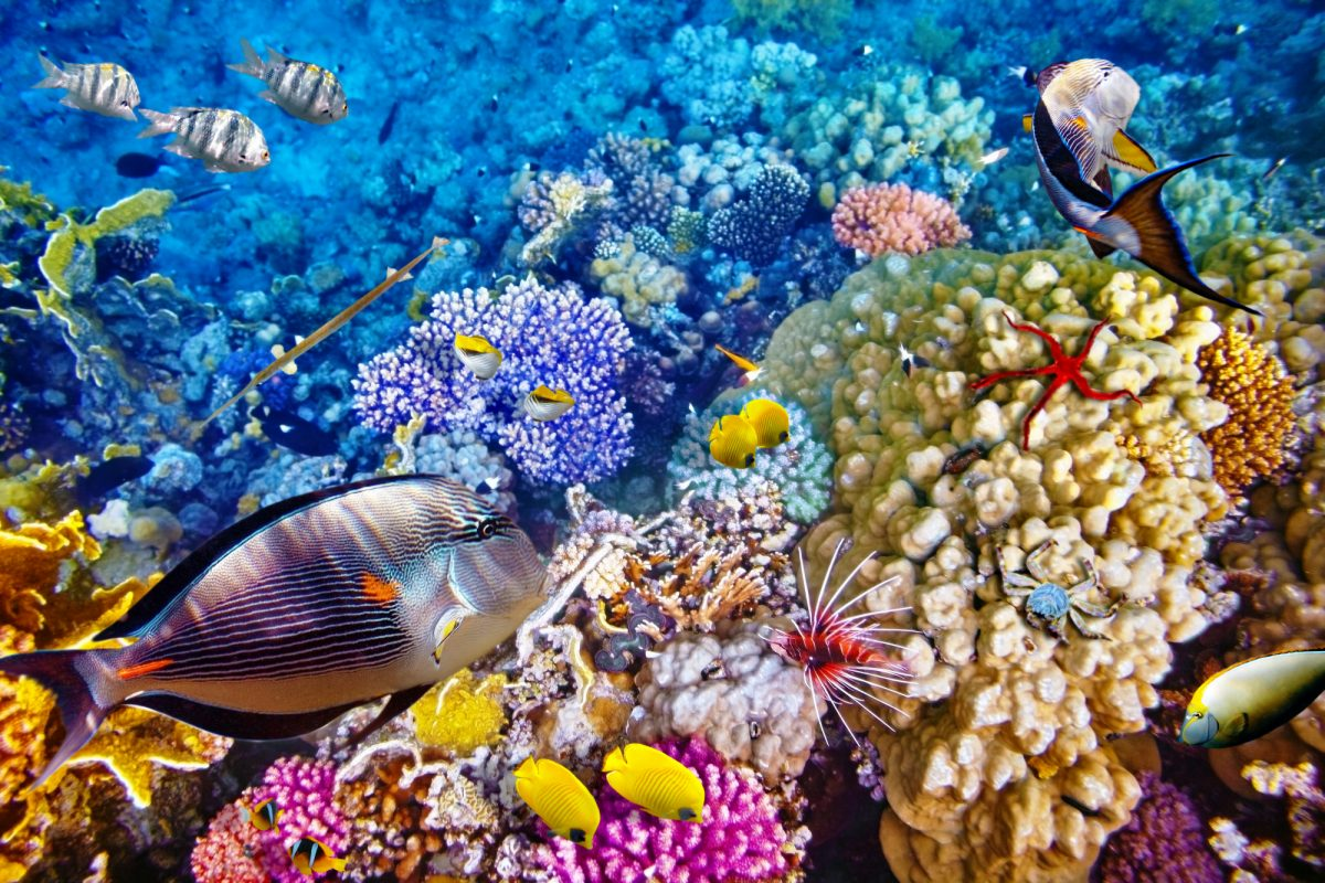 Aus_Great Barrier Reef