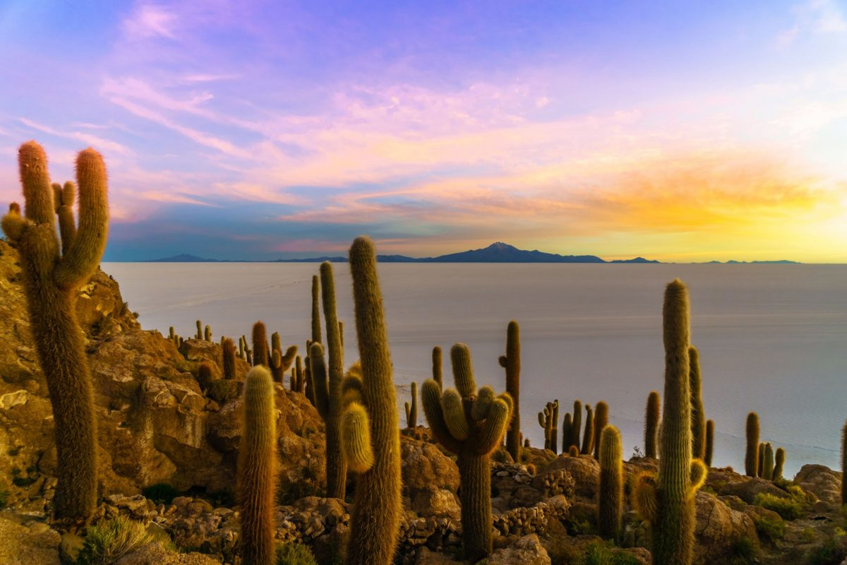 Bolivia Uyuni Incahuasi island