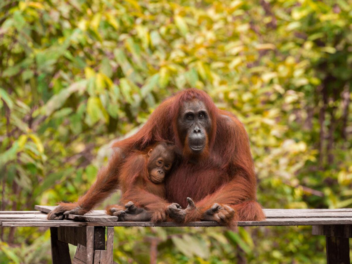 Borneo_Kalimantan