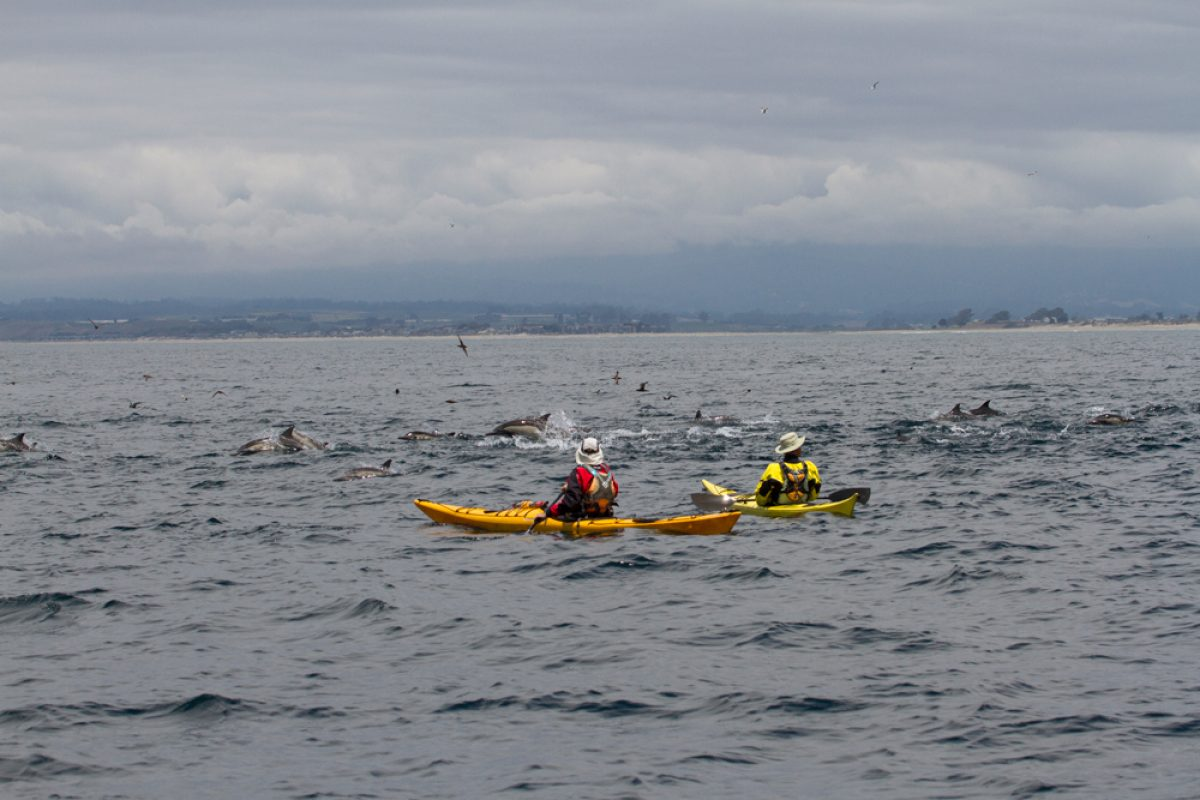 Cheeseman USA dolphin kayaking