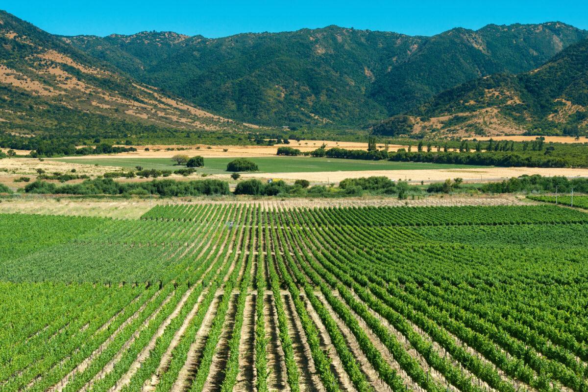 Colchagua-Wine-Route_lowres