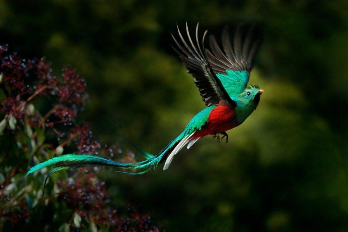 Costa-Rica-Quetzal