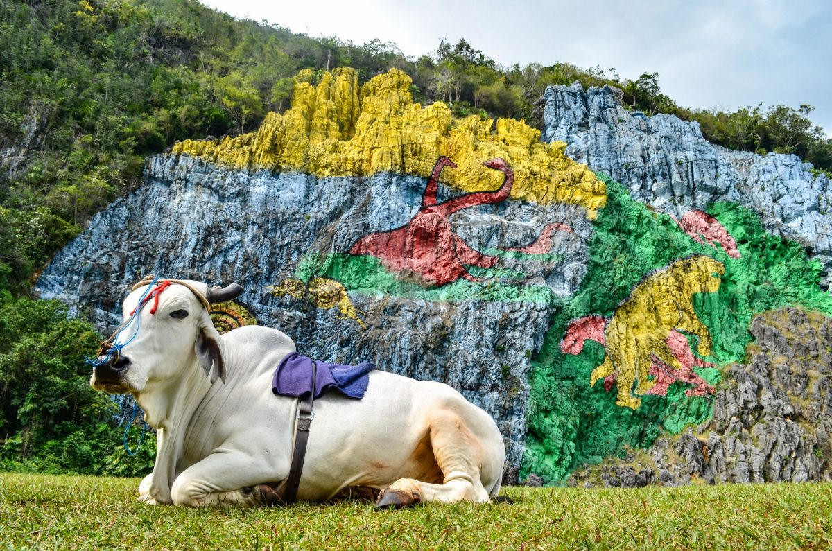 Cuba Vinales Mural de la Prehistoria a giant mural painted on a cliff face