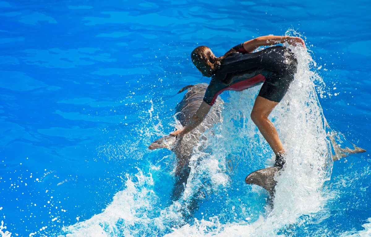 Dolphin show surfing