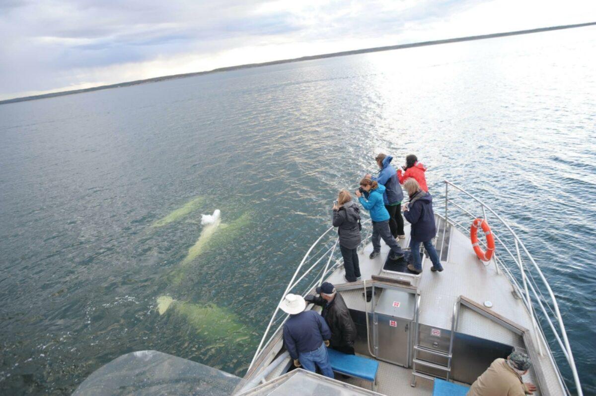 Frontiers North Canada beluga
