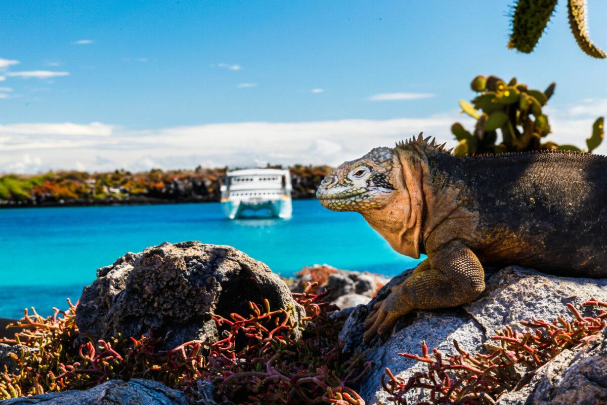 Galapagos-boat-iguana