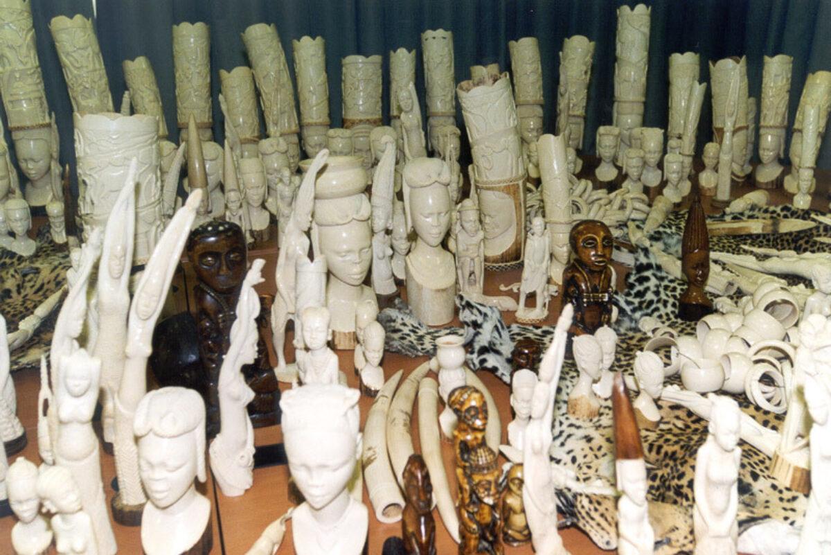 Ivory Born Free Foundation