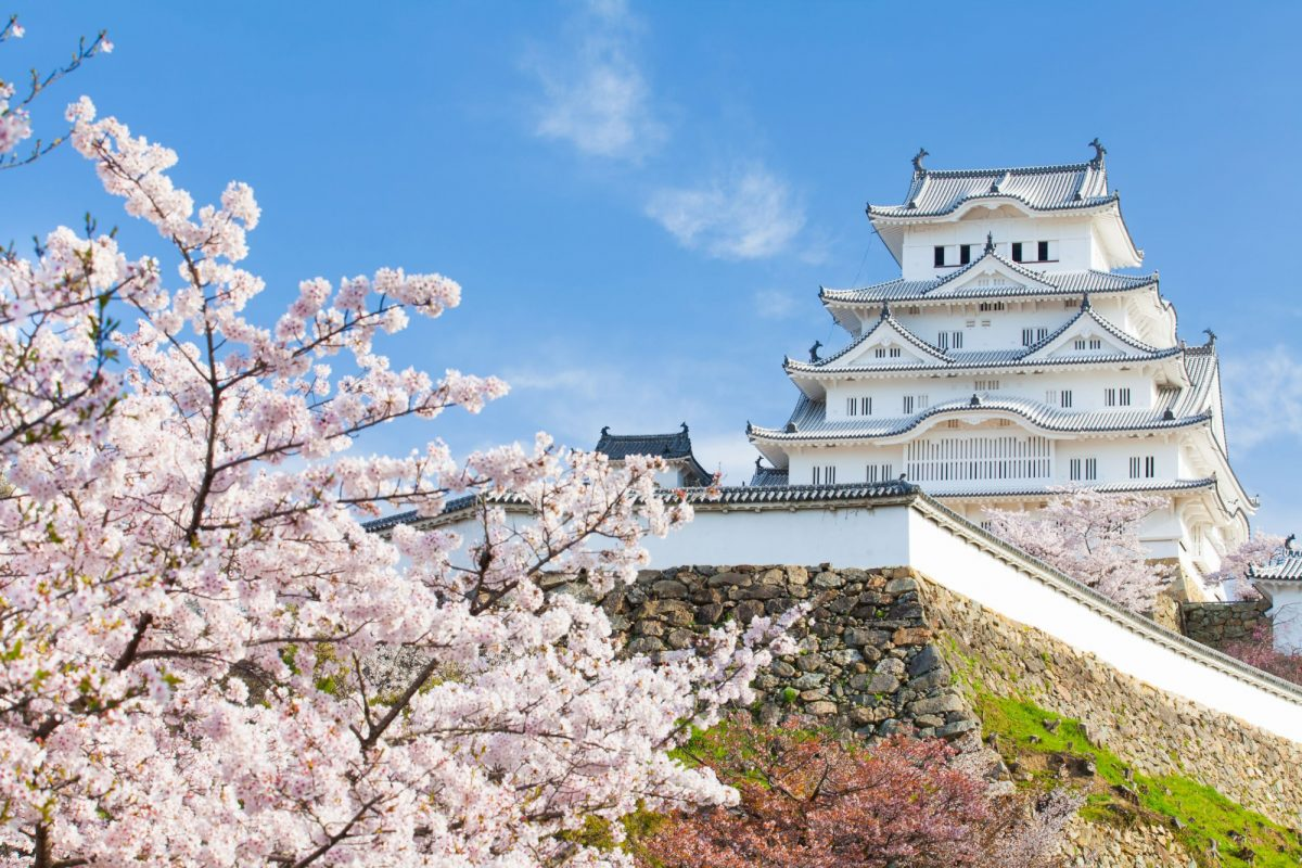 Japan Himeji castle blossom