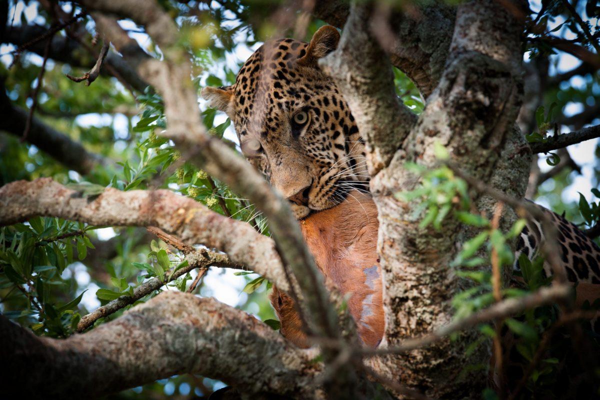 Kenya Masai Mara