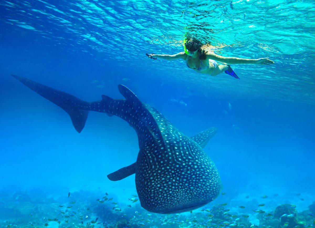 Philippines Whale shark snorkelling landscape