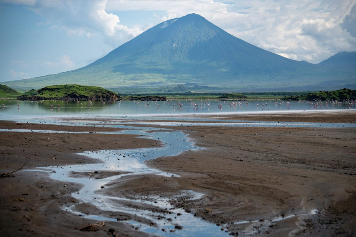 Pink lesser Flamingos at Lake Natron with Ol Doinyo Lengai volcano on background in Rift valley Tanzania