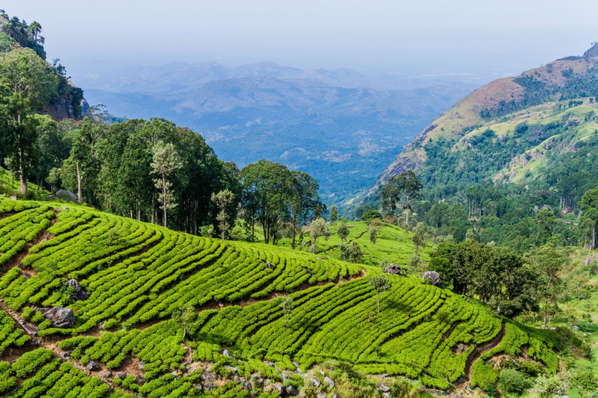 Sri Lanka Haputale4