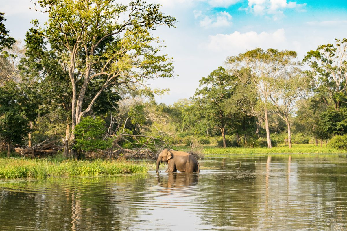 Sri-Lanka_Udawalawe_lowres