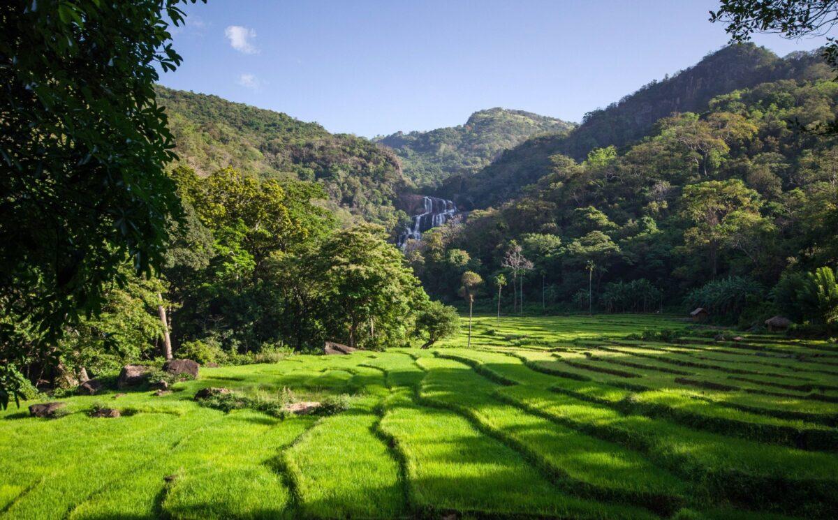 Sri Lanka knuckles mountain range ricefields