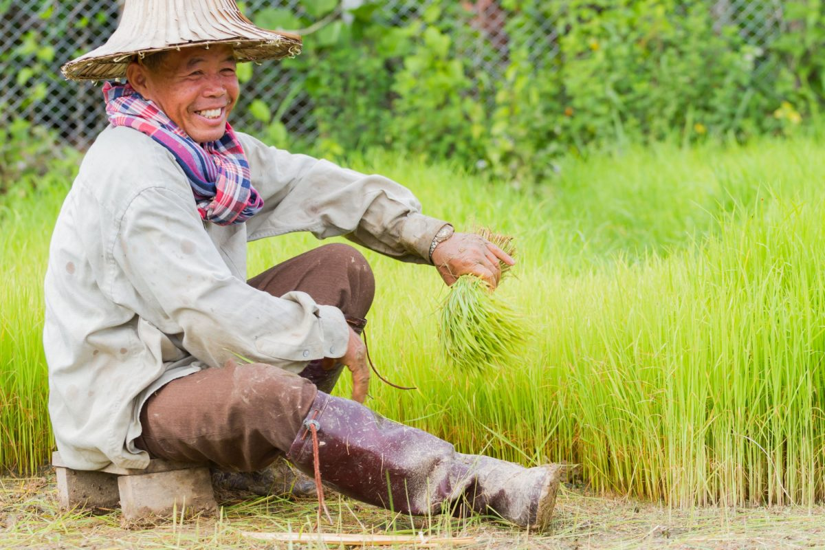 Thailand Chiang Rai Unidentified smiling asian male farmer working rice planting in the field on June 16 2017 in Chiang rai