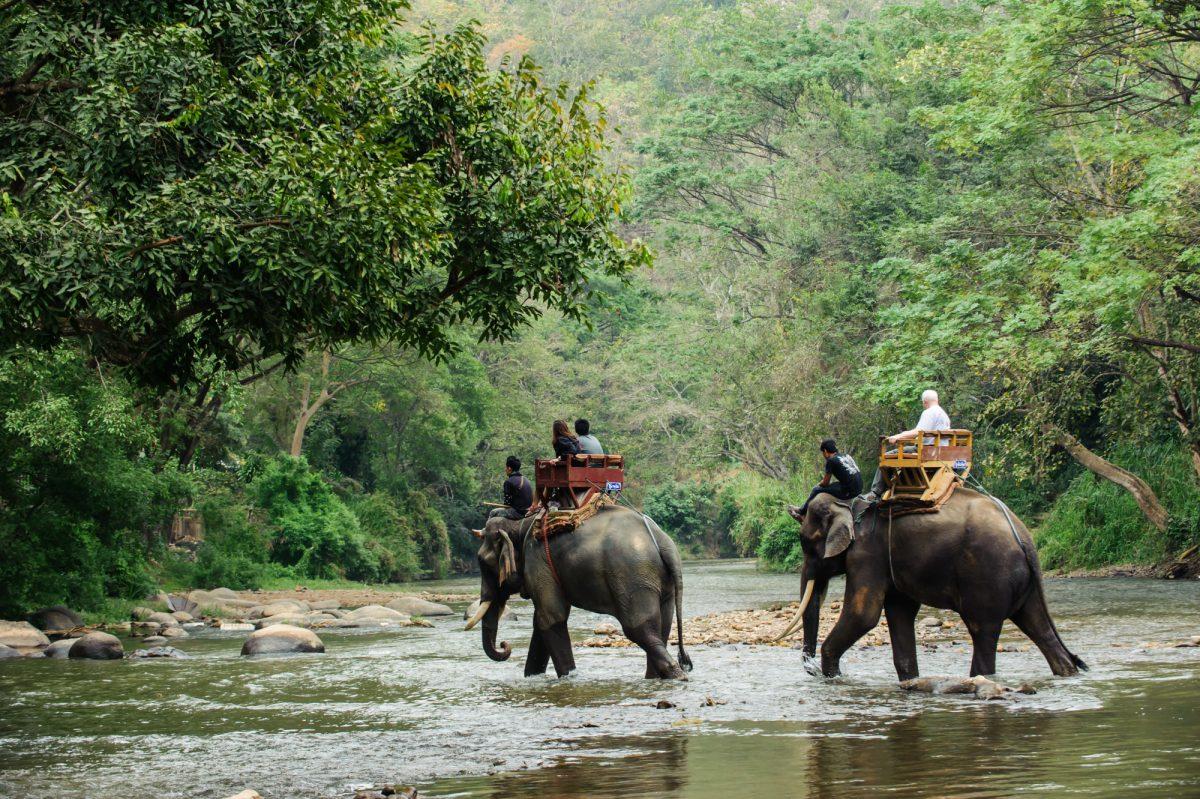 Thailand Chiang Mai elephant trekking