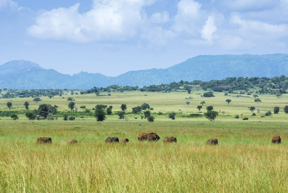 Uganda Kidepo Valley
