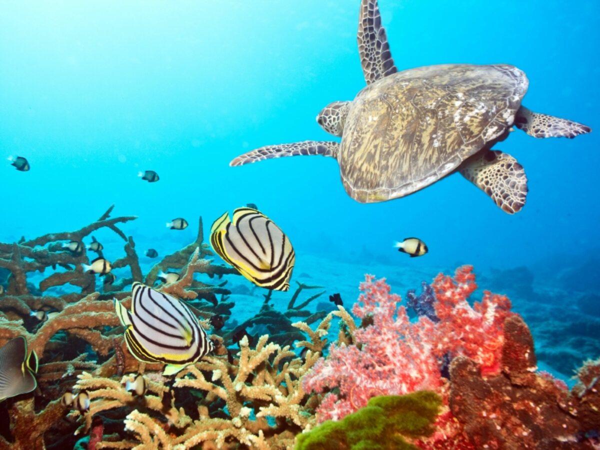 Vietnam_Underwater