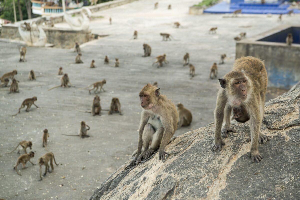 Wat Khao Takiap or Monkey Temple near the City of Hua Hin in Thailand