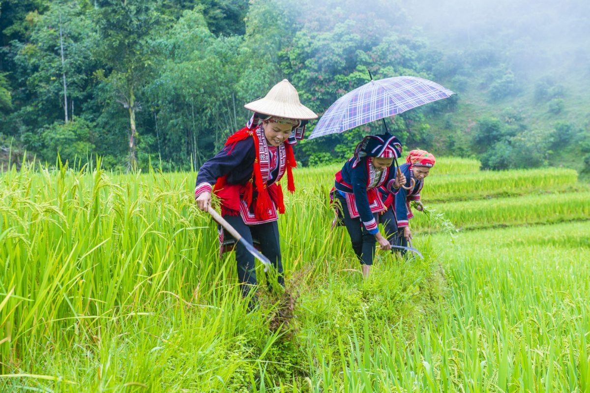 Women from the Red Dao minority in a village near Ha Giang vietnam