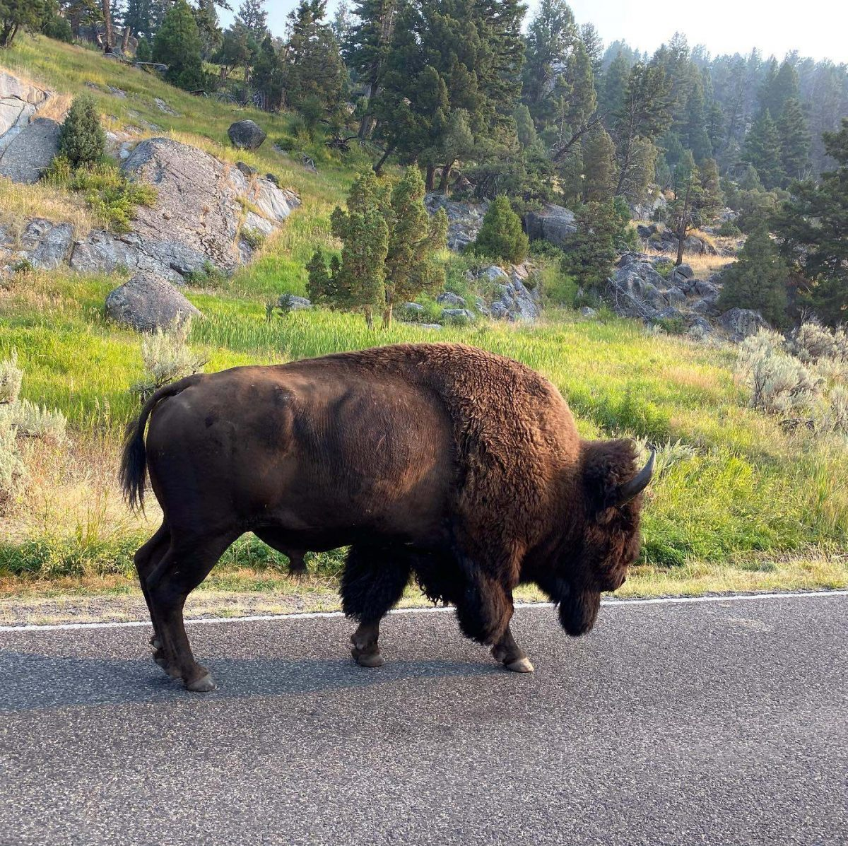 Yellowstone dreamin adventures 2
