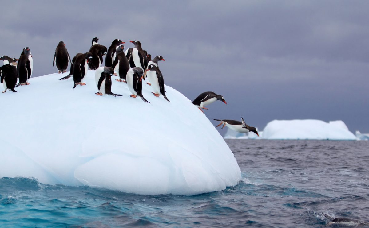 Antarctica-Penguins