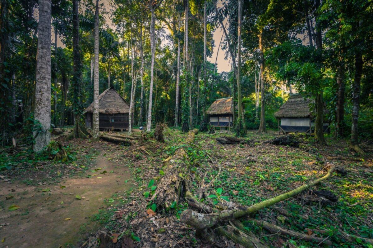 Jungle lodge Manu national park
