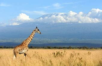 Kilimanjaro and Tanzania Wildlife Adventure