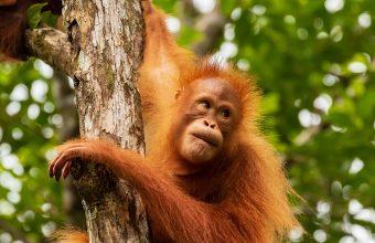 Orangutans, rainforests, beaches