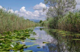Hutovo Blato Nature Reserve