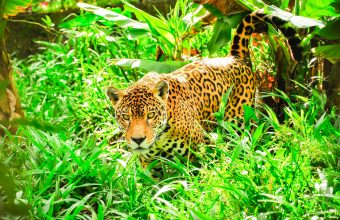 Amazon and Pantanal adventure
