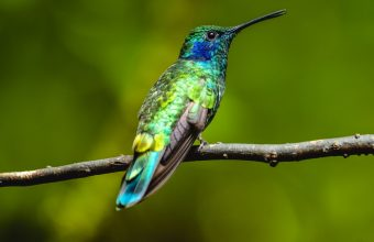 The Magic of the Tropical Birdsong