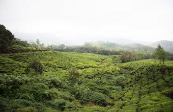 Tea plantations, backwaters and Keralan culture