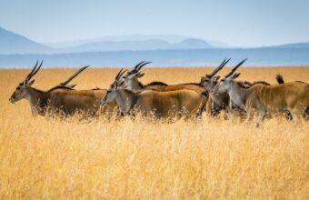 Kenya's wildlife conservancies
