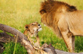 Laikipia and Mara safaris