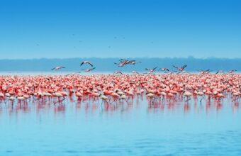 Fly-in Masai Mara safari plus Great Rift Valley