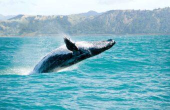 New Zealand wildlife and waterways